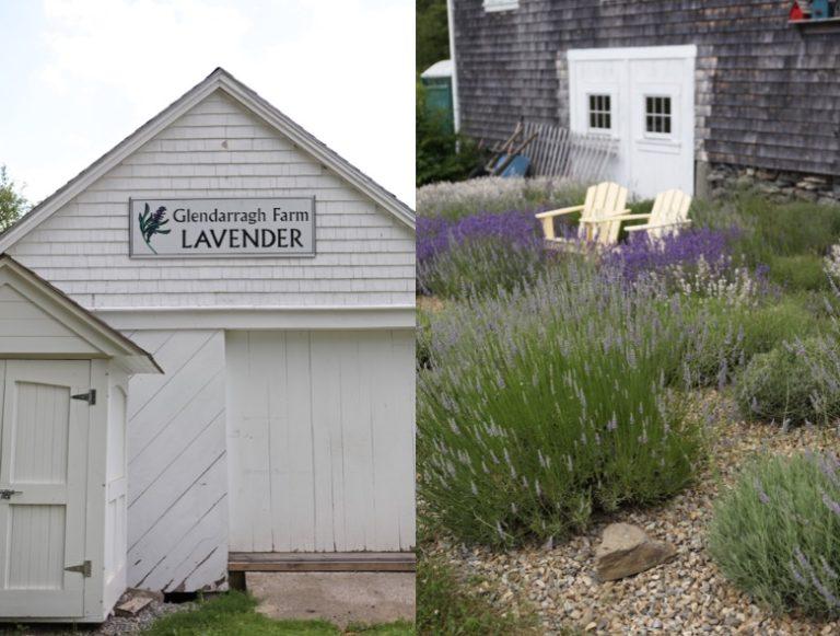 glendarragh lavender farm in maine