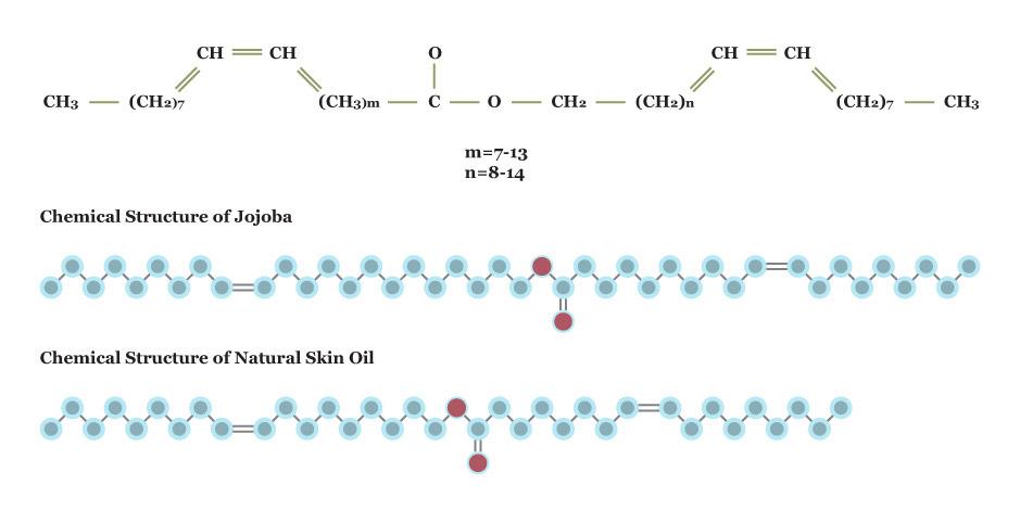 diagram comparing the jojoba molecule with a molecule of human sebum